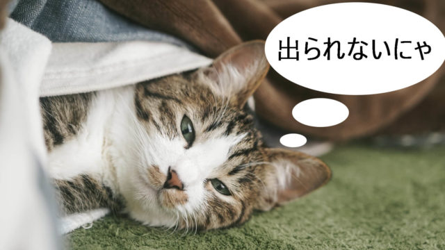 毛布が大好きな猫!