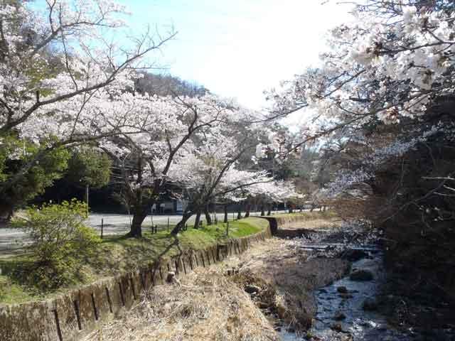 岩屋堂、春は桜-99