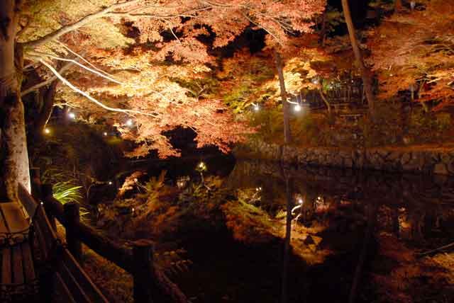 岩屋堂、紅葉ライトアップ写真99