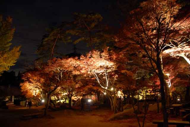 岩屋堂、公園内部の写真。ライトアップ時99